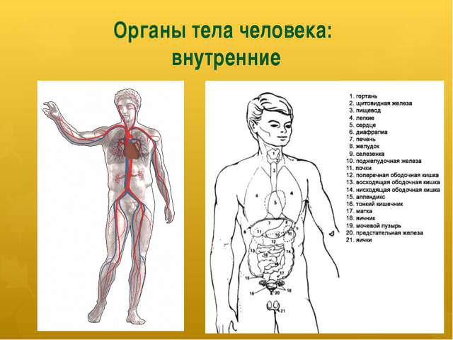 А органы и функции