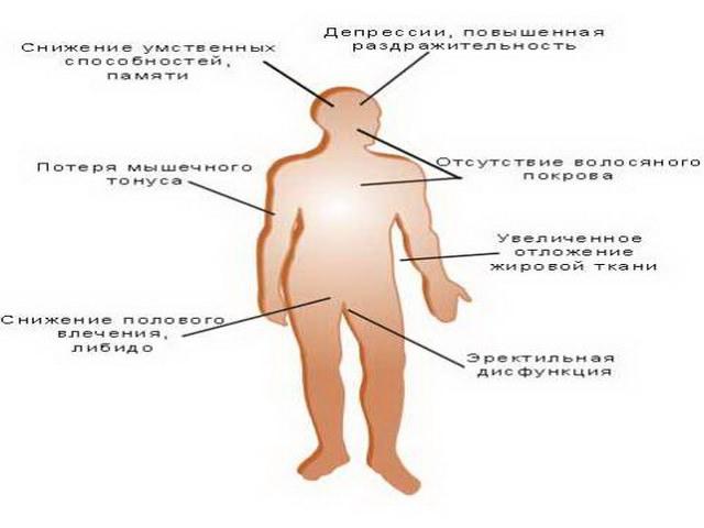 Причины повышение тестостерона у мужчин