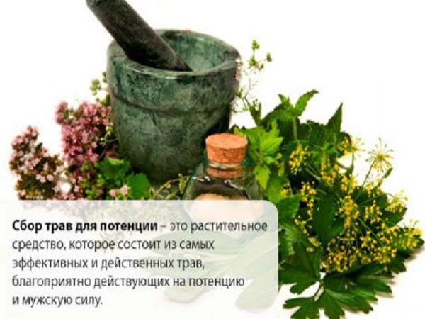 Растения укрепляющие мужскую силу